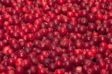 Red bilberries.