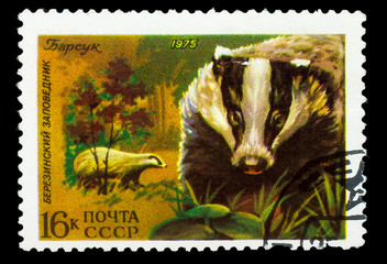 USSR - CIRCA 1975: A stamp printed in USSR, shows Badger, Berezi