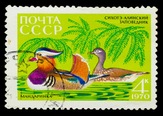 USSR - CIRCA 1970: A stamp printed in USSR, show mandarin duck t