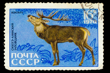 USSR - CIRCA 1970: A stamp printed in USSR, shows Bambi Siberian