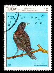 CUBA - CIRCA 1978: A stamp printed by Cuba, shows Bird Cuban Cub