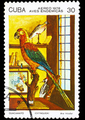 CUBA - CIRCA 1978: A stamp printed by Cuba, shows Bird Cuban Red