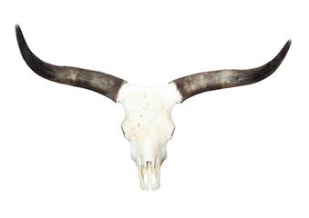 Bull skull with long horns.