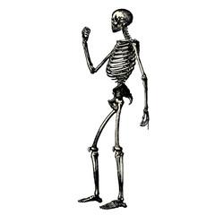 Squelette de profil
