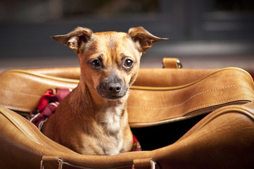 Foto auf Acrylglas Hund Dog Bag