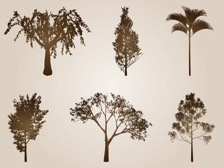 High resolution set of vintage old trees