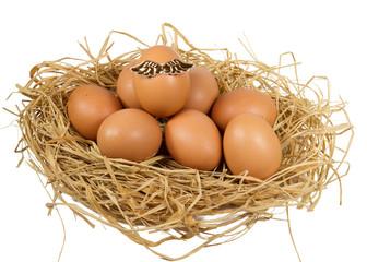 angel egg
