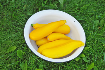 Yellow Zucchinies in the bowl