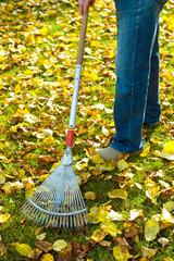 fall- work
