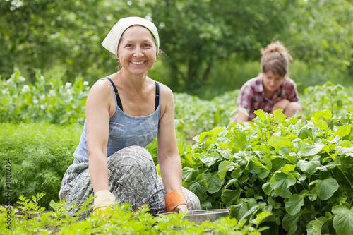 фото женщин в огороде