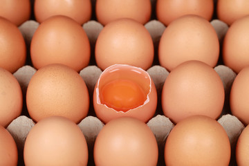 Eier in einer Schachtel