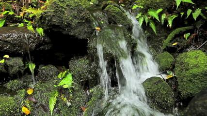 Wall Mural - Lush Jungle Waterfall