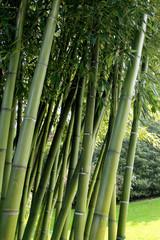 giardino di bambù
