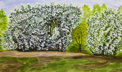 Bird cherry tree in blossom, painting