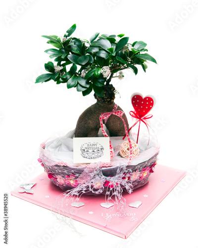 bonsai baum geschenk stockfotos und lizenzfreie bilder auf bild 38945520. Black Bedroom Furniture Sets. Home Design Ideas