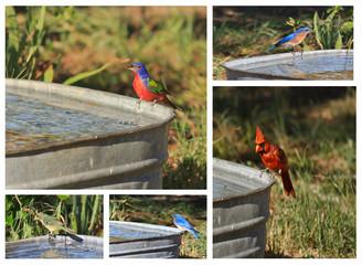 Birds in Yard Collage