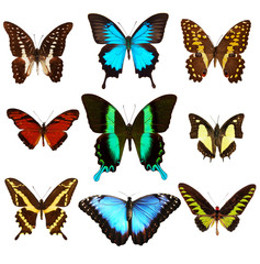 Collection of butterflies, isolated on white background