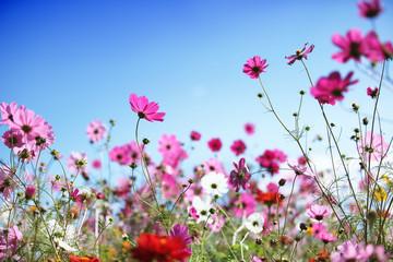 Wall Mural - Spring flower
