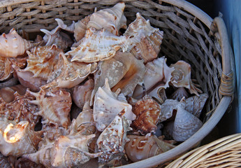 A Wicker Basket Holding a Collection of Sea Shells.