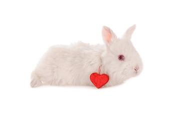 white baby rabbit and heart