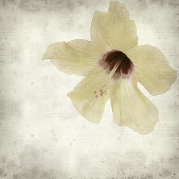 textured old paper background with  yellow hibiscus flower