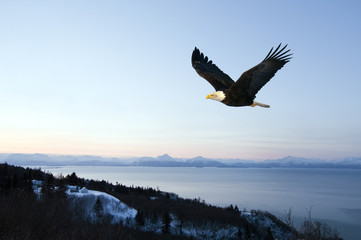 Blad eagle