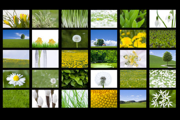 Frühlingsbilder
