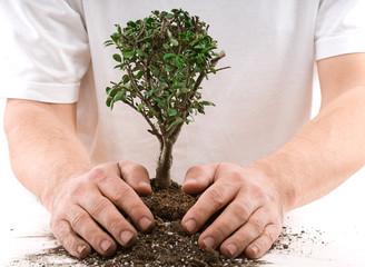 Gardener planting a tree