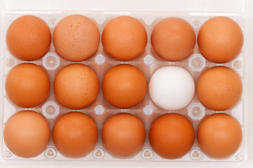 Eggs in box
