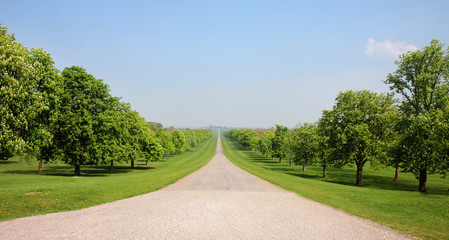 Fototapete - The Long Walk in Windsor Great Park