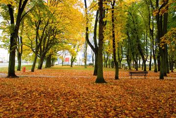 Autumn Park in Poland