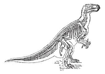 Iguanodon vintage engraving