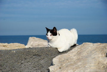 white and black cat on the rock