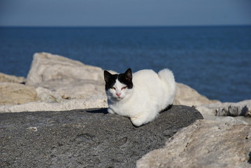 cat on the rocks front of the sea