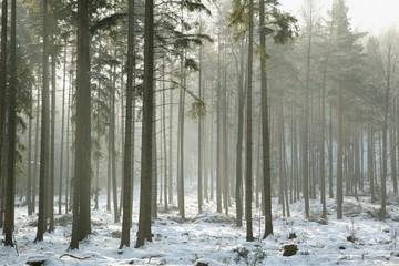 Keuken foto achterwand Bos in mist Coniferous forest on a frosty winter morning