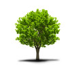 green free tree
