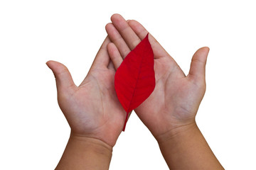 hand and red leaf