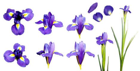 Iris flower set