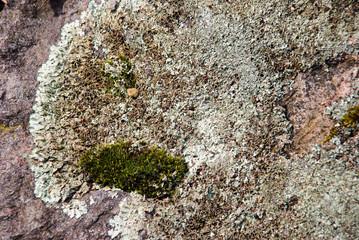 Lichen on the rock