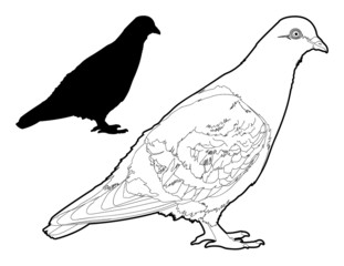 Pigeion Outline and Silhouette Illustration