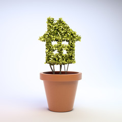 House shaped plant
