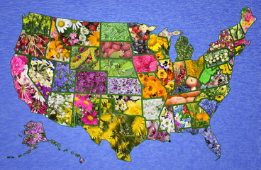 USA American map from flowers