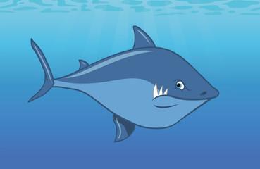 shark Great White swimming ocean