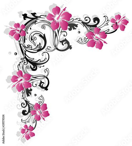 Hibiskus, hibiscus, Ranke, flora, Blumen, pink\