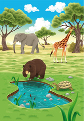Canvas Prints Bears Animals in the nature. Vector realistic illustration.