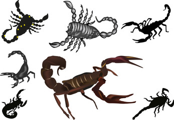 seven isolated scorpions