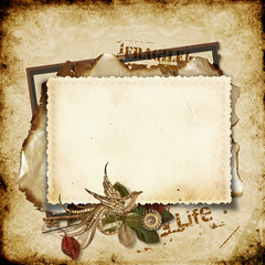 Vintage background with old card and bird
