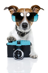 dog taking  a picture
