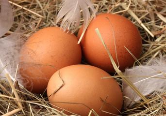 chicken eggs in a nest on wooden background