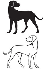 Silhouette and contour dog